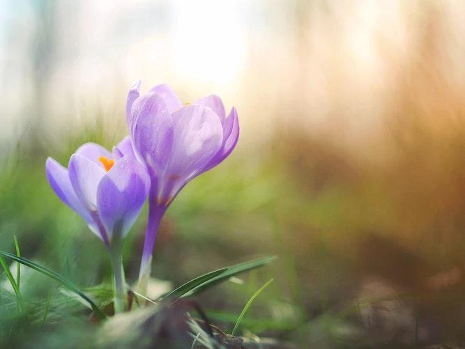 spring creative journaling